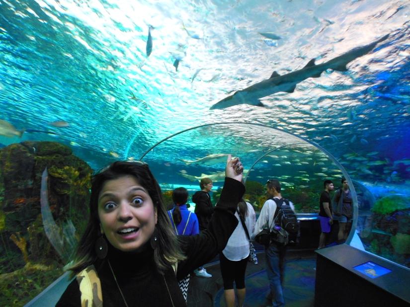 Ripley's Aquarium of Canada | Vídeos daMagali